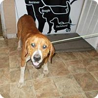 Adopt A Pet :: Washington - Lewisburg, TN