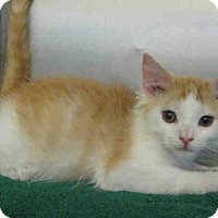 Adopt A Pet :: *SWEET PEA - Norco, CA