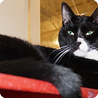 Adopt A Pet :: Harry & Larry - Salem, NH