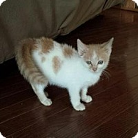 Adopt A Pet :: Peanut - Morgantown, WV