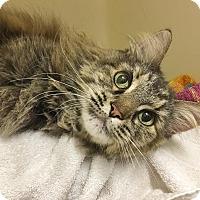 Adopt A Pet :: Jambalaya - Salisbury, MA