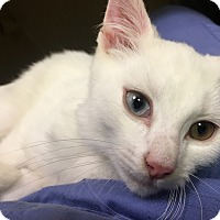 Adopt A Pet :: Harley - Fairfield, CT