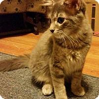 Adopt A Pet :: Trace Adkins - Hockessin, DE