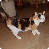 Adopt A Pet :: Mia - Evans, WV