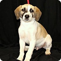 Adopt A Pet :: Clark - Chester Springs, PA