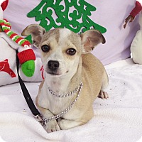 Chihuahua Mix Puppy for adoption in West Chicago, Illinois - Daizee
