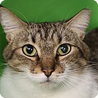 Adopt A Pet :: Molly - Sarasota, FL