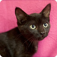 Adopt A Pet :: Astrid - Sioux Falls, SD