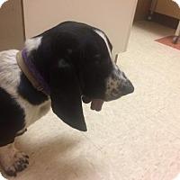 Adopt A Pet :: Clifford - San Diego, CA