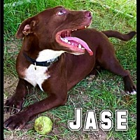 Adopt A Pet :: AAA - Jase / 2017 - Maumelle, AR