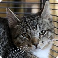 Adopt A Pet :: Jonah - Sarasota, FL
