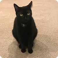 Adopt A Pet :: Africa - Boca Raton, FL