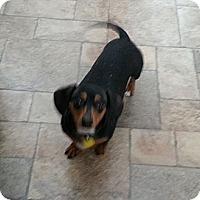 Adopt A Pet :: Guiness - Saskatoon, SK