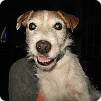 Adopt A Pet :: Argo - Thomasville, NC