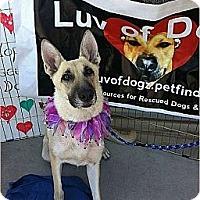 Adopt A Pet :: Chloe Anya - Scottsdale, AZ