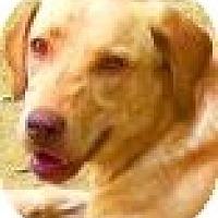 Adopt A Pet :: TAYLA - Wakefield, RI