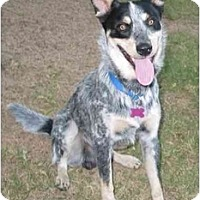 Adopt A Pet :: EJ *Adoption Pending* - Phoenix, AZ