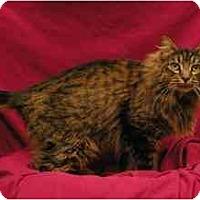 Adopt A Pet :: Jody - Sacramento, CA