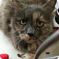 Adopt A Pet :: Tori - Raritan, NJ