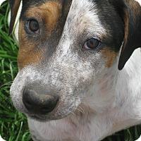 Adopt A Pet :: Jelly - Derry, NH