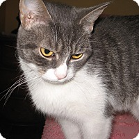 Adopt A Pet :: Rosie - Colmar, PA