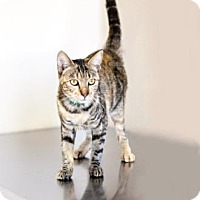 Adopt A Pet :: Paprika - Visalia, CA