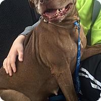 Adopt A Pet :: Charlotte - Grand Rapids, MI