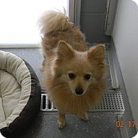Adopt A Pet :: PACO - Sandusky, OH