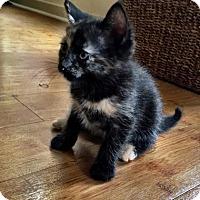 Adopt A Pet :: Zola - Austin, TX