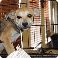Adopt A Pet :: Trix - Philadelphia, PA
