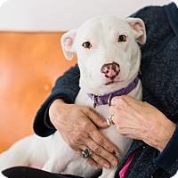 Adopt A Pet :: Carly B - Huntsville, AL