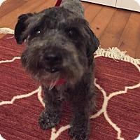 Adopt A Pet :: Bernadette - Redondo Beach, CA
