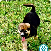 Adopt A Pet :: Raina - Kimberton, PA