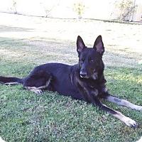 Adopt A Pet :: Thor - La Mesa, CA