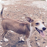 Adopt A Pet :: CROIX (please see video) VEGA BARKLEY - Waldron, AR