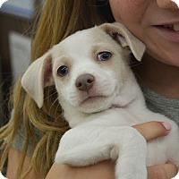 Adopt A Pet :: Tierian - Ogden, UT