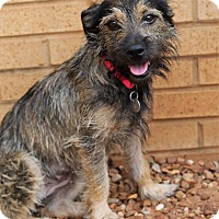 Adopt A Pet :: Jesse Belle - PORTLAND, ME