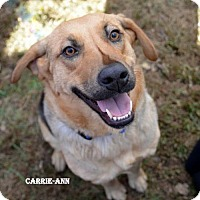 Adopt A Pet :: Carrie-Ann - Independence, MO