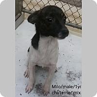 Adopt A Pet :: Milo - Sudbury, MA