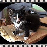 Adopt A Pet :: Andy - Mt. Prospect, IL