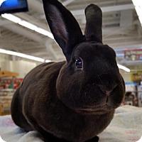 Adopt A Pet :: Boscoe - Los Angeles, CA