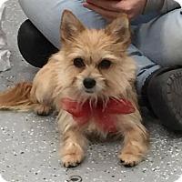 Adopt A Pet :: Maggie - Matawan, NJ