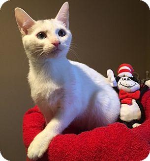 Domestic Shorthair Kitten for adoption in Wayne, New Jersey - Legend
