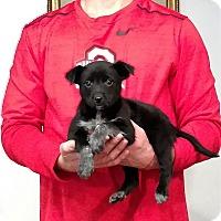 Adopt A Pet :: Rosie - Gahanna, OH