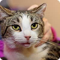 Adopt A Pet :: Ash - East Brunswick, NJ