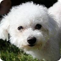 Adopt A Pet :: Zoe - La Costa, CA