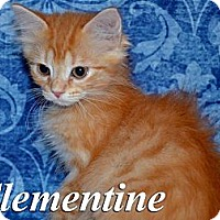 Adopt A Pet :: Clementine - Troy, OH