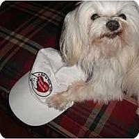 Adopt A Pet :: Alfie - South Amboy, NJ