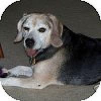 Adopt A Pet :: Scoobie - Novi, MI