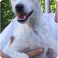 Adopt A Pet :: SAMMIE JO - Phoenix, AZ